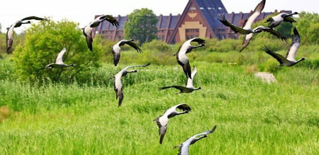鳥類科普園