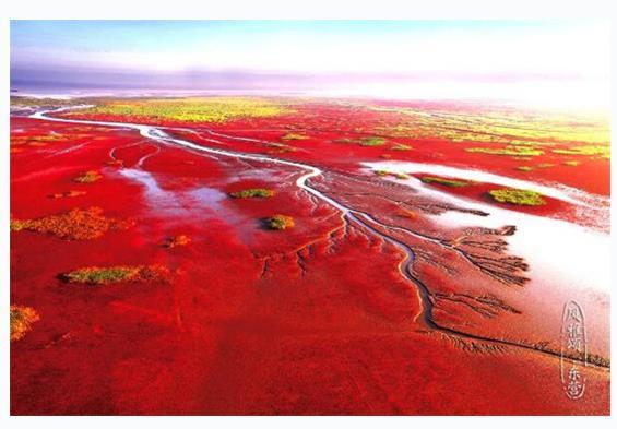 每日一景|山東東營黃河三角洲國家級自然保護區