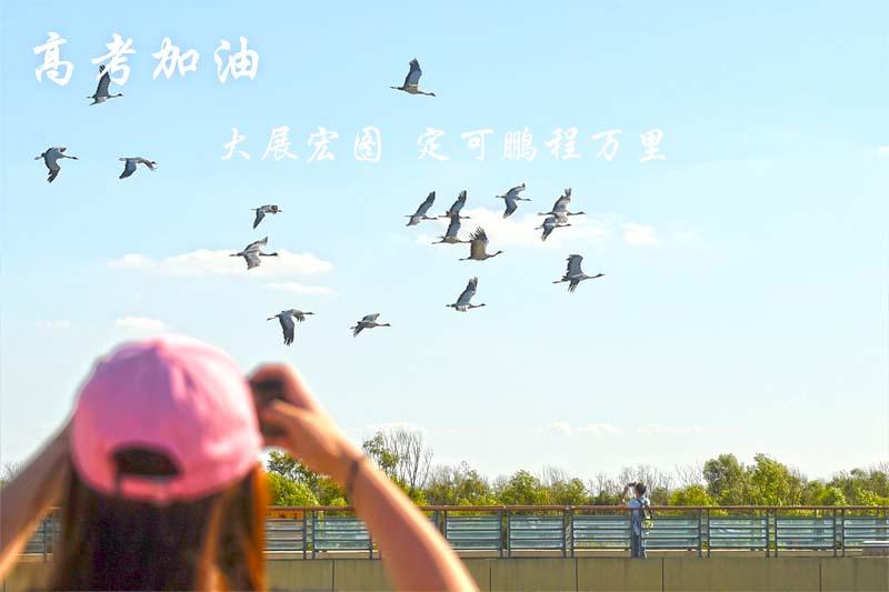 黄河口新闻图片